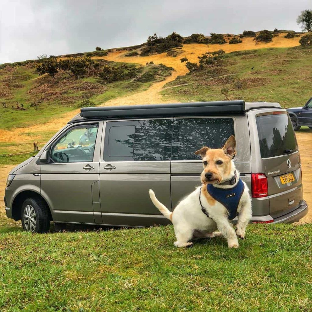 Dogs enjoy camper van holidays too
