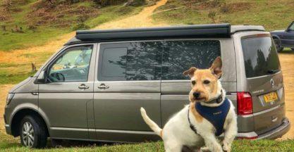 Dogs enjoy camper van holidays too